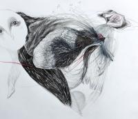 10_img0456-disegno-civetta-2013-1000.jpg