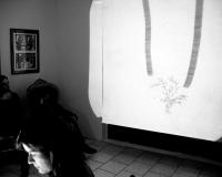 http://www.fragilecontinuo.blogspot