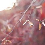 nature 015