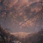 nature 05 (3)