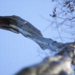 nature 06